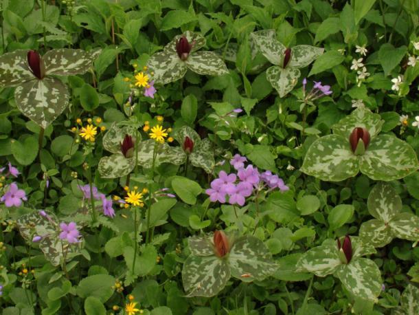 mix of spring species