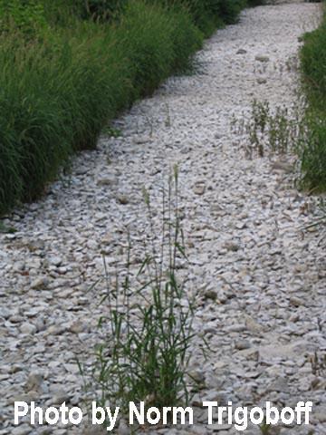 White rocks in stream